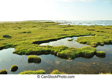 claro, águas, de, Wetland, pântanos