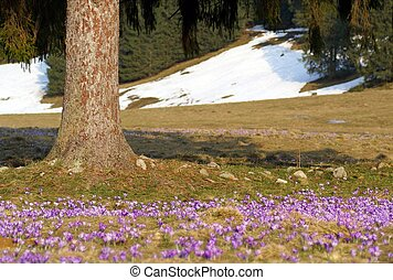 Spring in mountains - Spring in Tatry mountains...