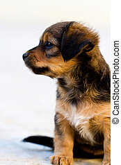 domestic dog - Close view of a young domestic dog on the...