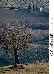 toscano, campo, invierno