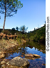 forest river - View of the beautiful forest river in the...