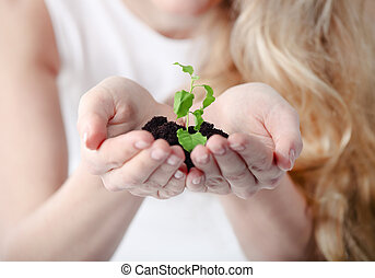 植物, 女, 彼女, 若い, 保有物, 手