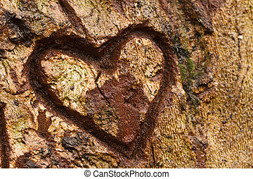 heart on tree - Close view detail of a heart carved on a...