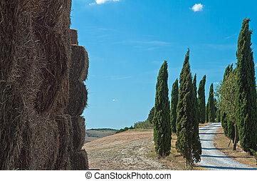 avenue of cypresses in the Crete Se - viale di cipressi...