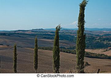 panorama of the Crete Senesi - viale di cipressi nelle crete...