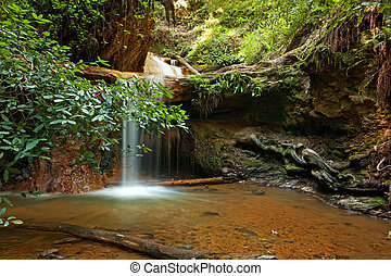 Silver Falls on Berry Creek Trail, Big Basin, CA - The...