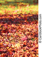 colorful  leaves - some colorful  leaves in autumn