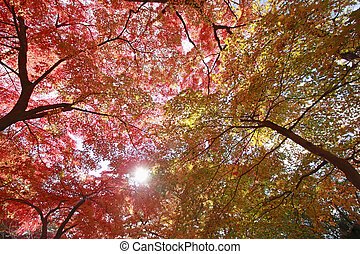colorful  leaves   in Iwate park