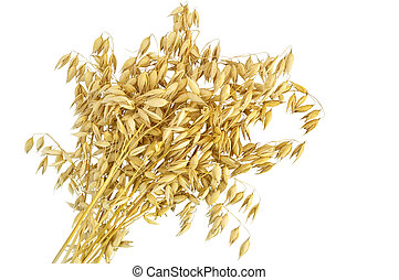 Oat stalks sheaf - Sheaf of stalks of oats isolated on white...