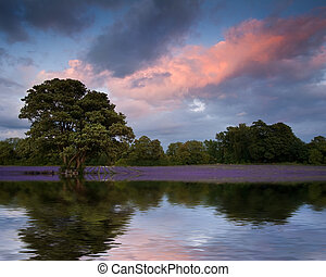 Beautiful sunset over lavender field reflected in calm lake wate