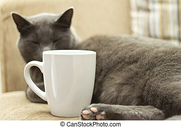 Cat on a sofa with white cup - Gray cat on a sofa with white...