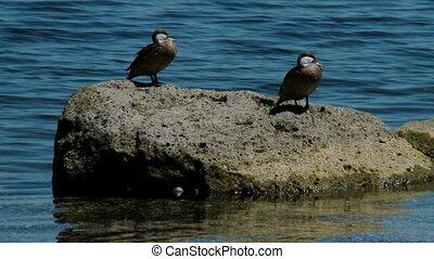 birds on the sea on a rock
