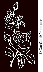 three white roses isolated on black background, vector...