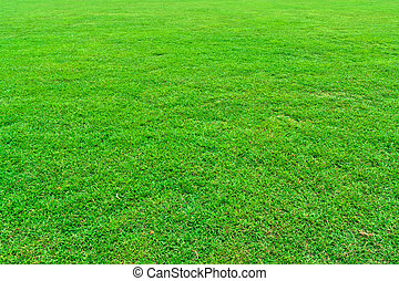 Green grass field - Fresh green grass field background...