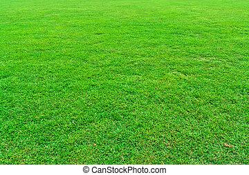 Green grass field - Fresh green grass field background...