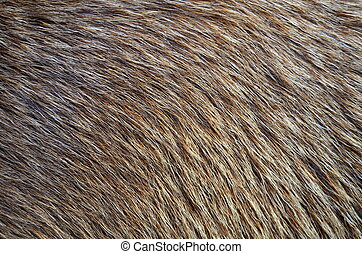 Background of Animal Fur - Abstract Background Texture...