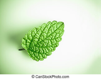 Fresh green spearmint on a white background and green...