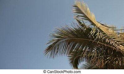 Palm Tree, Blue Sky - Palm Tree In Sun