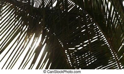 Palm Tree In Sun
