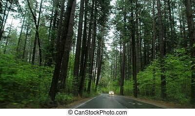 Driving Through a Forest