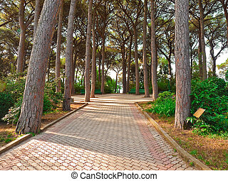 Alley of Italian pines - Pushkin alley under Italian pines...