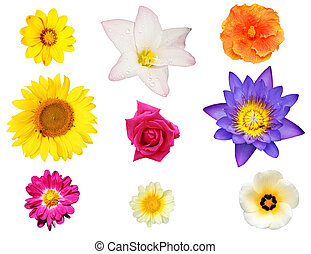 Isolated collection of flowers like lily, hibiscus, daisy -...