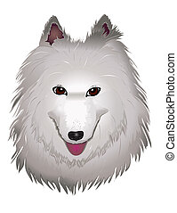 white Samoyed dog smiles - vector purebred fluffy white...