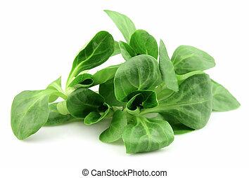 corn salad leaves - Fresh corn salad leaves on white