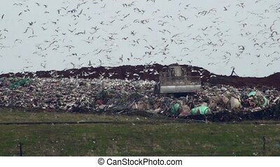 Landfill site - Uk landfill site with machinery moving...