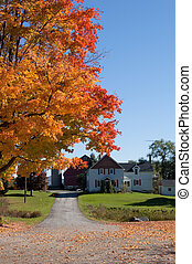 Colorfull trees around house in fall time