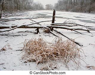 Lib Conservation Area Winter Scene