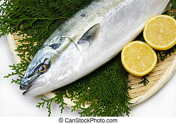 yellowtail - Cooking ingredient series yellowtail. for adv...