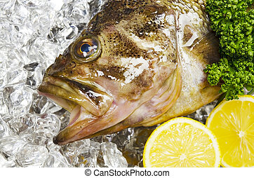 threestripe rockfish - Cooking ingredient series threestripe...