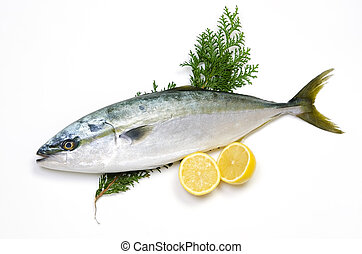 yellowtail - Cooking ingredient series yellowtail. available...