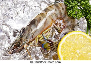 kuruma prawn - Cooking ingredient series kuruma prawn. for...