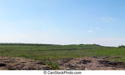 Ukrainian wildlife preservation, reserve Stone mogyla