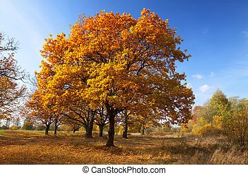 Autumn lanscape with oak grove - Autumn lanscape with oak...