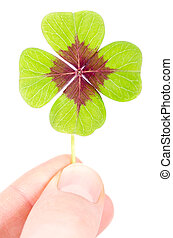 a four leaved cloverleaf between two fingers - a fourleaved...