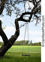 Empty swing on a gnarly tree