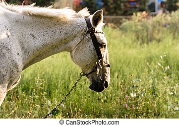 Closeup of a beutiful white horse