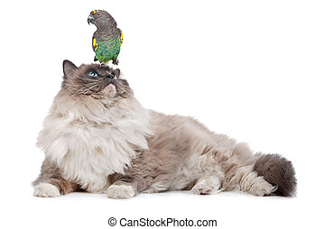 Cat and Parrot - A parrot sitting on a cats head in front of...