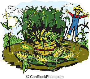Corn Crop Harvest - Corn field with scarecrow and basket...