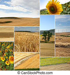cultivated fields: miscellaneous shots