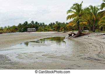lagoon drained - Palm trees and huts in a lagoon drained