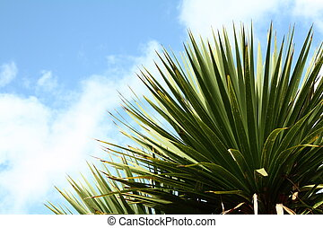 Palm tree with blue sky in the backgorund