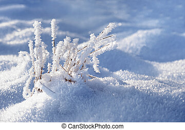 Grass with frost - Grass covered in hoar frost on sunny...