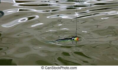 minnow - Lure fishing in the water