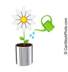 White flower in a chromed pot and green bailer. - Big white...