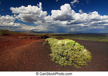 Flowers at Craters of the Moon - Flowers bloom amidst the...