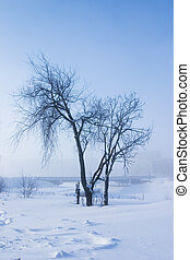 single tree is a misty winter day on a background sky and...